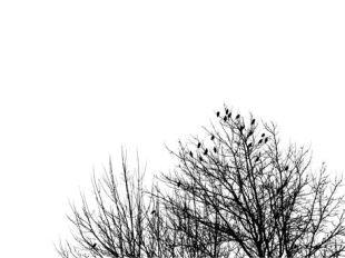 Oh, My Little Sparrow ~ CHRISTian poetry by deborah ann