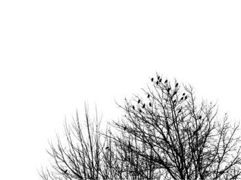 His Little Sparrow ~ CHRISTian poetry by deborah ann