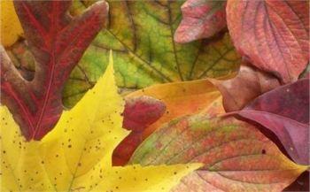 Autumn Blessings ~ CHRISTian poetry by deborah ann