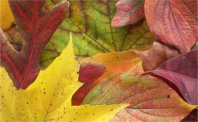 Autumn Blessings ~ CHRISTian poetry by deborah ann