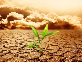green-plant-budding free photo