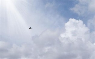 If I Could Fly ~ CHRISTian poetry by deborah ann