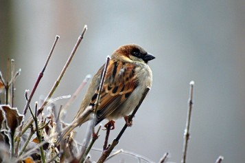 Sparrow ~ CHRISTian poetry by deborah ann