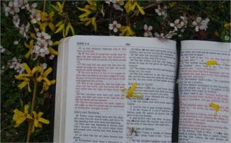 Bible with Flowers by Bruce Jennings free photo #2717
