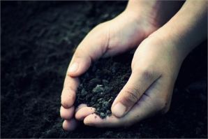 What Seeds Are You Sowing? ~ CHRISTian poetry by deborah ann