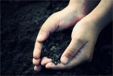 Soil by Marian Trinidad free photo # 9785