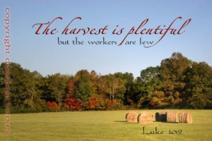 The Harvest used with permission Doorpost Verses on Facebook