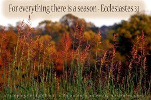 In Due Season ~ CHRISTian poetry by deborah ann