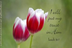 I Will Put My Trust used with permission Doorpost Verses on Facebook