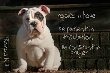 Rejoice in Hope used with permission Doorstop Verses facebook