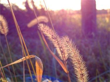 Nature by Sandara Lee free photo Creation Swap