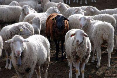 Black Sheep ~ CHRISTian poetry by deborah ann Wikipedia