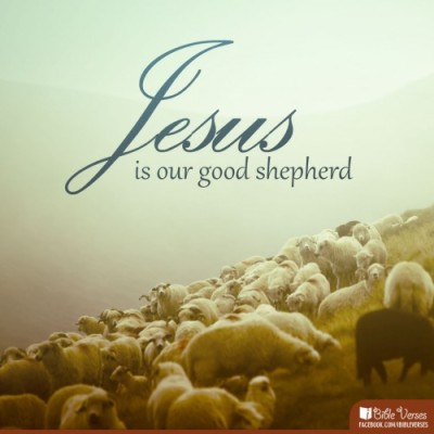 shepherd-500x500 used with pemission IBible Verses