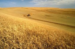 Harvest Season ~ CHRISTian poetry by deborah ann ~ photo wikipedia