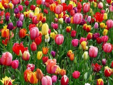 Good Morning Spring ~ CHRISTian poetry by deborah ann