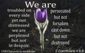 Do Not Dispair ~ CHRISTian poetry by deborah ann belka ~ free to use