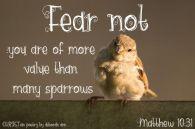 Flighty Sparrows ~ CHRISTian poetry by deborah ann belka ~ free to use